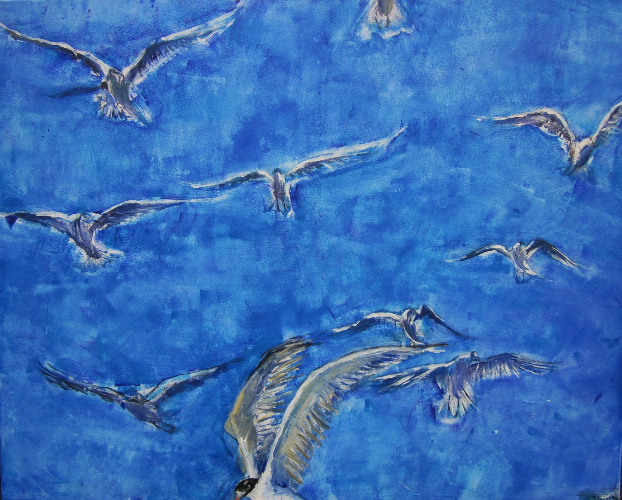 Vögel über dem Meer